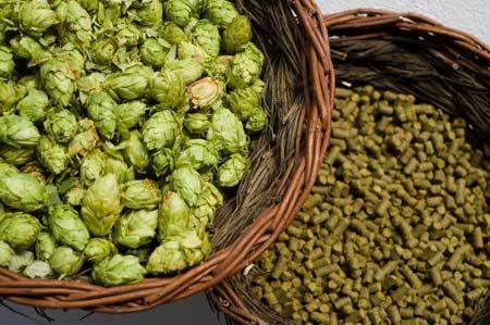 lupulo-cerveja-dry-hopping